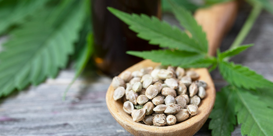 cannabis seeds in spoon. hemp oil benefits for skin. hemp oil benefits for pain.