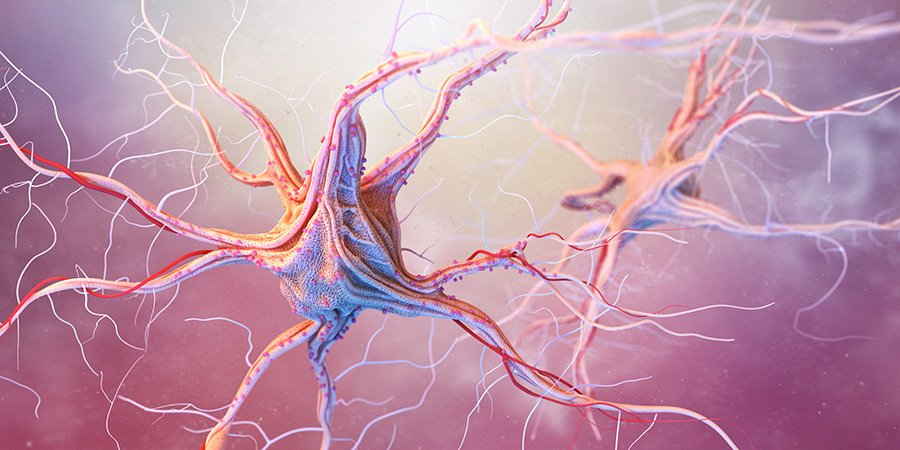 neurons and nervous system cbd oil and epilepsy.