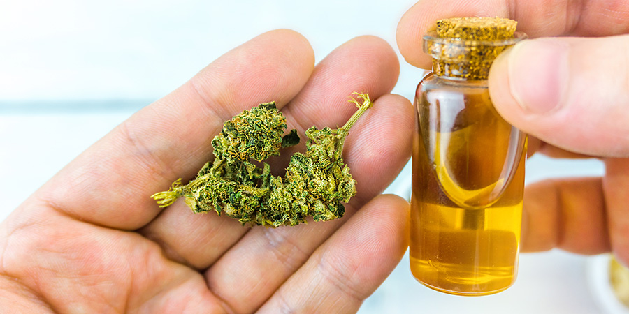 Images of cannabis and cannabidiol oil. People in a CBD seminar asking questions. Does delta 8 thc get you high? Will 8% thc get me high? Will 8 percent thc weed get you high? delta 8 thc high. Buy delta-8 THC online USA.
